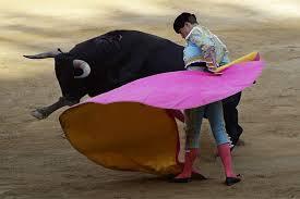 french bullfighting