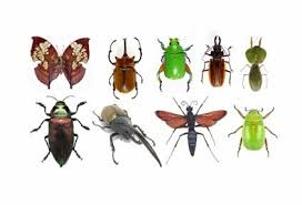 insects images