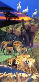 wild life of africa