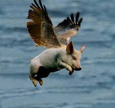 pigs fly picture