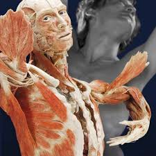 bodyworlds and the mirror of time