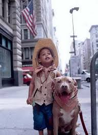 pitbull owners