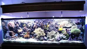 picture of aquarium