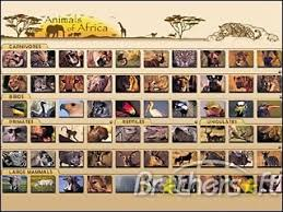 all animals in africa