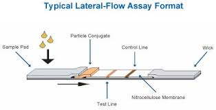 lateral flow