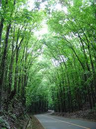 philippine forest