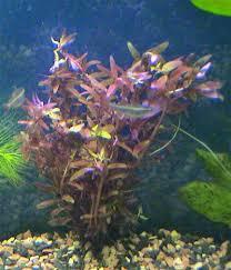 nombres de plantas acuaticas