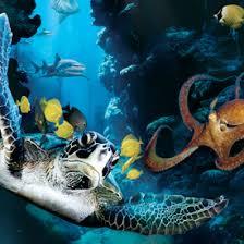 deep sea film
