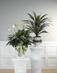 plant decorations