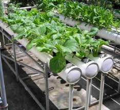 homemade hydroponics system