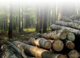 deforestation of trees