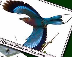 tanzanian birds