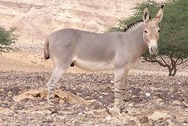 african wild animals pictures