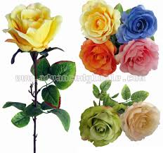 flower rose picture