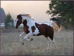 horse comps