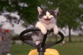 cat lawn