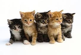 images kittens