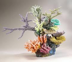 fishtank coral