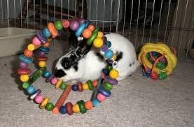 bunnies toys