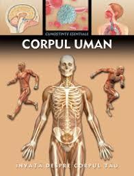 partile corpului omenesc