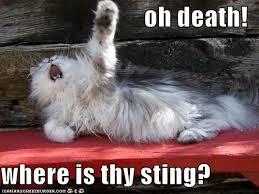 cats death