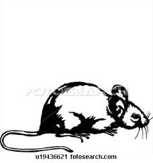 animal mice