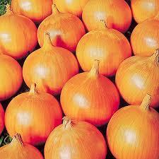 onion varieties