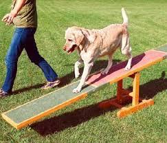 dog agility see saw