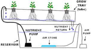 nft hydroponic