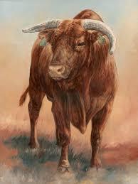 little yellow jacket the bull