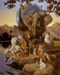 photos of african animals