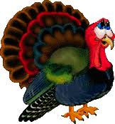 animated turkey graphics