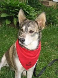bandana for dog