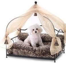 luxury pets