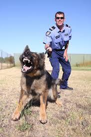 police dog squad