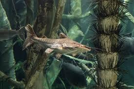 aquarium catfish pictures