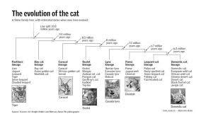 evolution cat