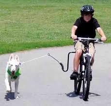 springer bicycle