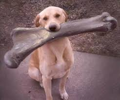 bone for dog