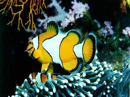 ocean life fish
