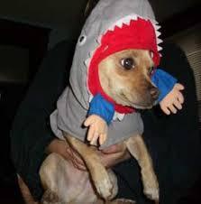 jaws dog