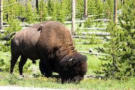 animals in the grassland biome