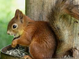 cute squirrel pictures