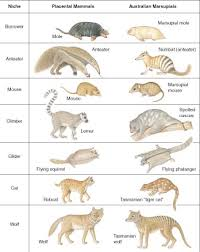 adaptacion morfologica