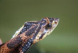 pictures of pennsylvania snakes