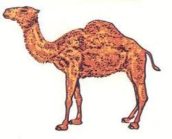 publicidad camel