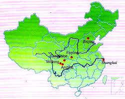 china giant pandas