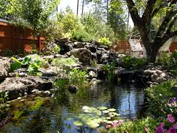 back yard ponds