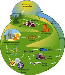 biomass conversions