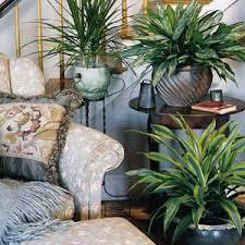 green houseplants